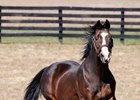 Champion Hansel Euthanized Due to Old Age