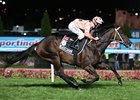 Black Caviar Electrifying in 24th Career Win