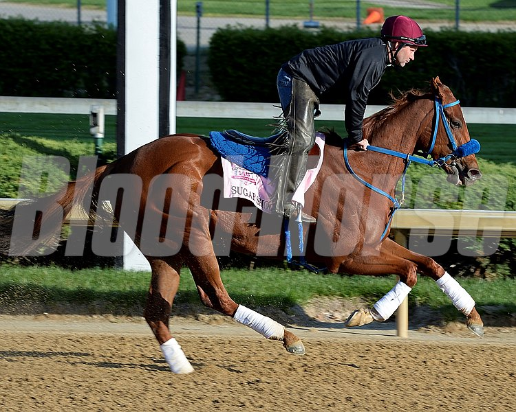 Caption: Sugar Shock with Seth VanDyke