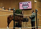 Kee Nov: $3 million Tapit Weanling in Ring
