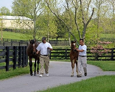 La Ville Rouge with her 2009 colt by Dynaformer, a full brother to Barbaro and Nicanor walking to the paddock.