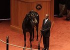Medaglia d'Oro Colt Sells for $440,000
