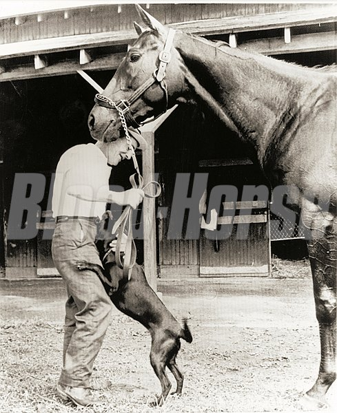 "Jaipur is shown with ex. boy Billy Quade and stable pet ""Charlie."" Jaipur is one of the leading contenders in the Travers. Saratoga Race Track August 16, 1962."