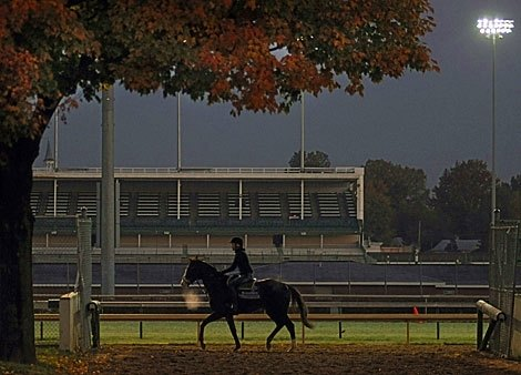 The calm before the storm, Marathon contender Giant Oak surveys the scene at Churchill Downs.
