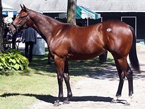 Distorted Humor Filly Brings $1 Million