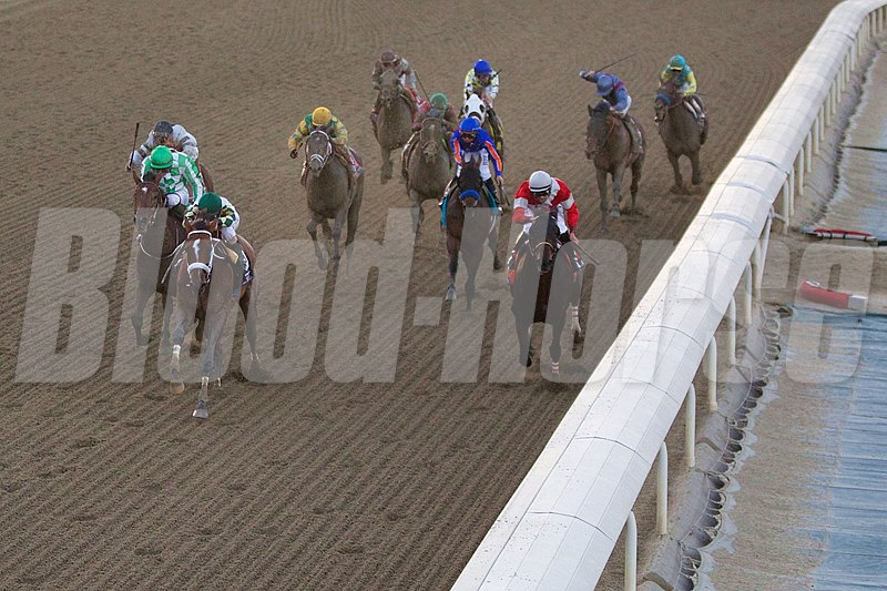 Mucho Macho Man (green cap, second from left), with Gary Stevens up, led the field down the stretch to win the Breeders' Cup Classic (gr. I).