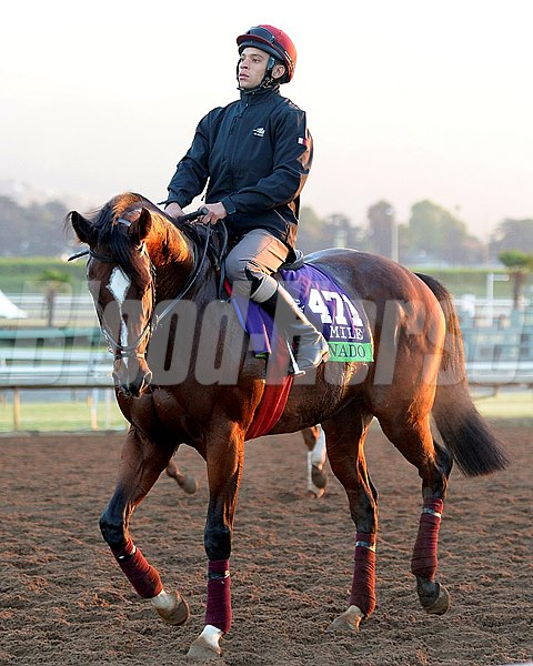 Caption:  Toronado