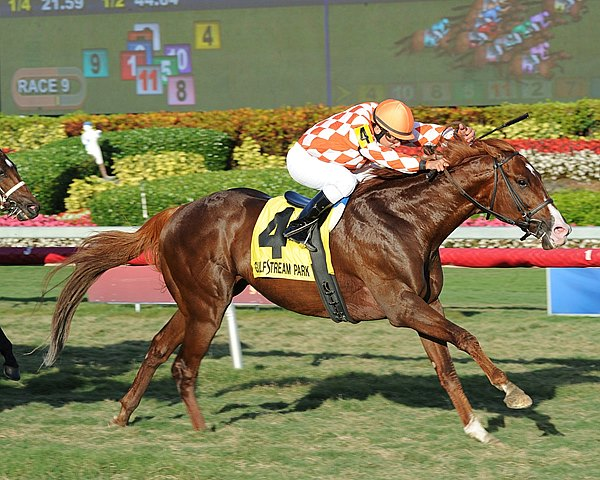 Wicked Tune is victorious in the Gulfstream Park Turf Sprint Stakes in Florida.