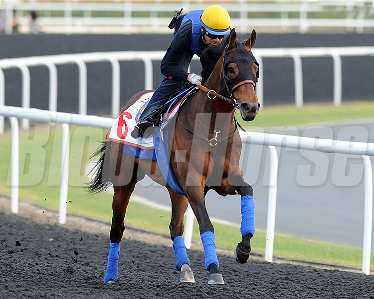 Dubai World Cup morning works, Thursday morning 3/29/12