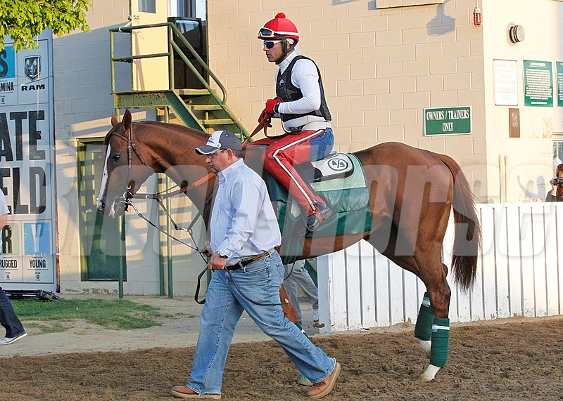 California Chrome works out  at Churchill Downs in preperation for the 2014 Preakness Stakes at Pimlico