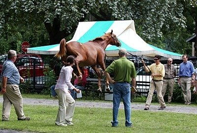 The Fasig-Tipton Saratoga select yearling sale kicked off the week.