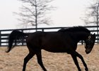 Adena Springs Relocates Three Stallions