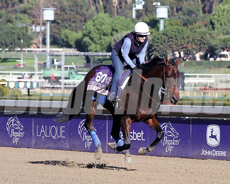 Secret Compass on the track at Santa Anita Park on October 30, 2013. Photo By: Chad B. Harmon