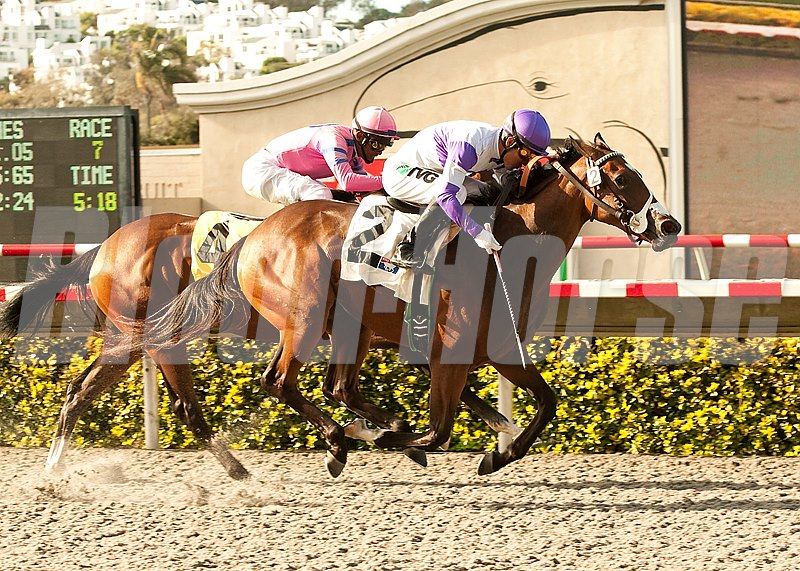 Concave and jockey Mario Gutierrez (right) overpower She's a Tiger to win the Grade II $150,000 Sorrento Stakes at Del Mar.