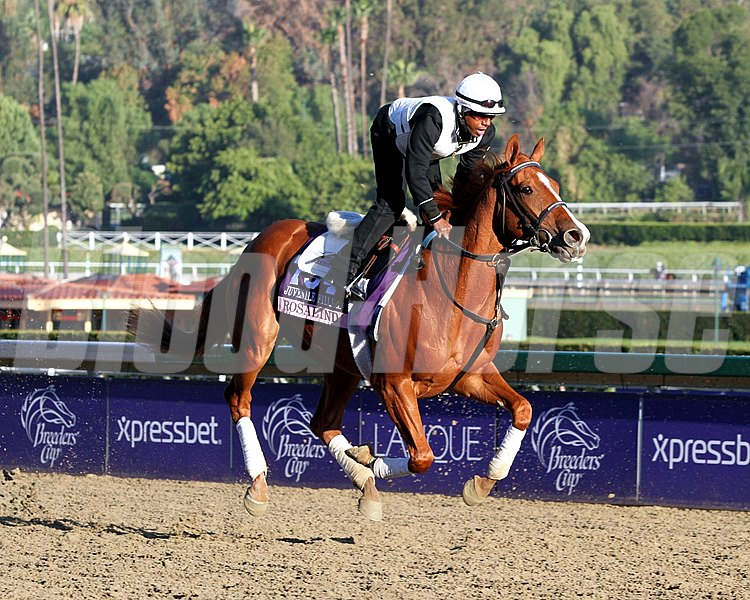 Rosalind on the track at Santa Anita Park on October 30, 2013. Photo By: Chad B. Harmon