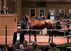 Fasig-Tipton November Sale Wrap 2014