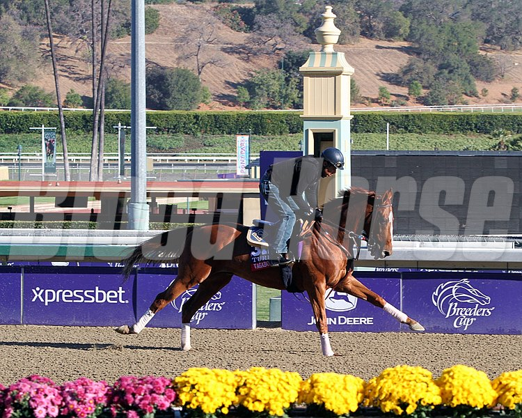 Vagabond Shoes on the track at Santa Anita Park on October 31, 2013. Photo By: Chad B. Harmon
