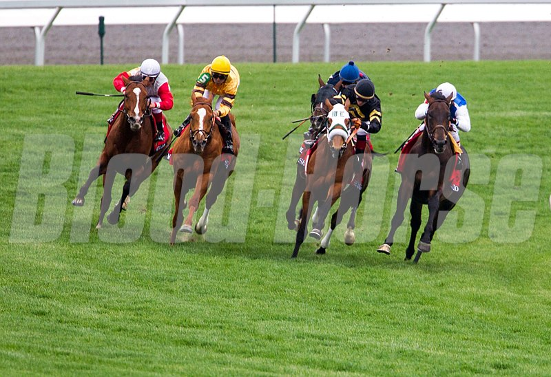 Wise Dan (yellow silks) and the rest of the field come around the final turn in  The 25th Running of The Maker's 46 Mile.