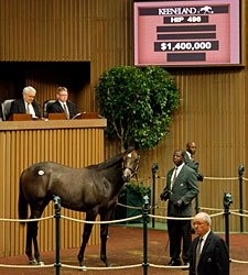 Coolmore Buys Galileo Colt for $1.4 Million