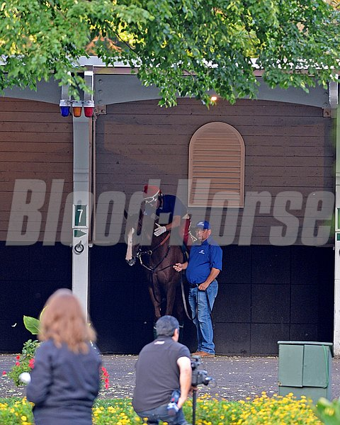 Caption: California Chrome schooling in the paddock with Alan Sherman