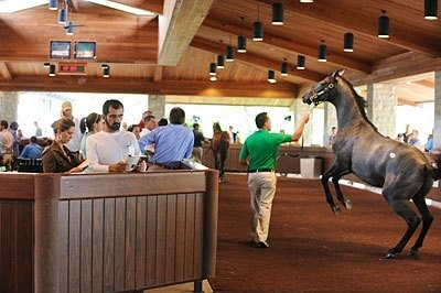 A GOOD READ: Sheikh Mohammed studies the sale catalog undeterred by an unruly yearling during the Keeneland September sale.