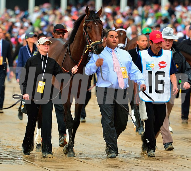 Kentukcy Derby Winner Orb being brought over from the barn before the race. Photo By Rick Schmitt