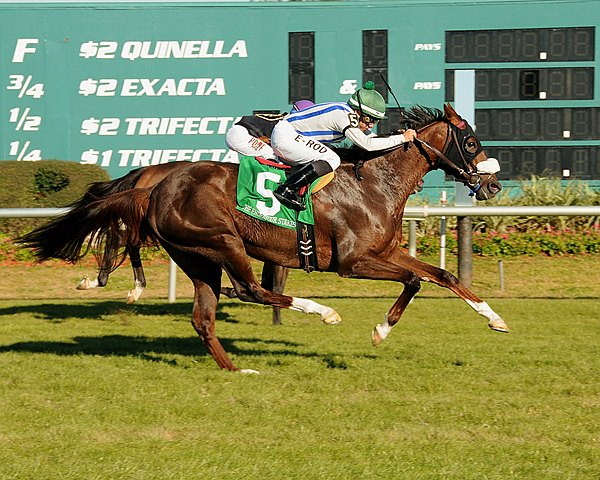Pin Oak Stud's homebred Cloud Scapes edged ahead of pacesetter Wholelottashakin in the stretch and won the $150,000 Grade II Endeavour Stakes  by a neck in her stakes debut at Tampa Bay Downs in Florida.