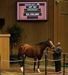 Love Me Only Brings $2.1 Million at Keeneland