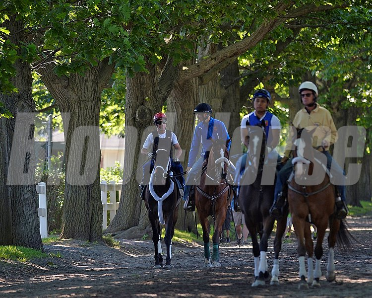 Caption: Ride On Curlin (red helmet) walks to track with pony