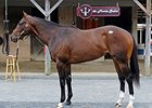 Unbridled's Song Colt Tops Midlantic Day 1
