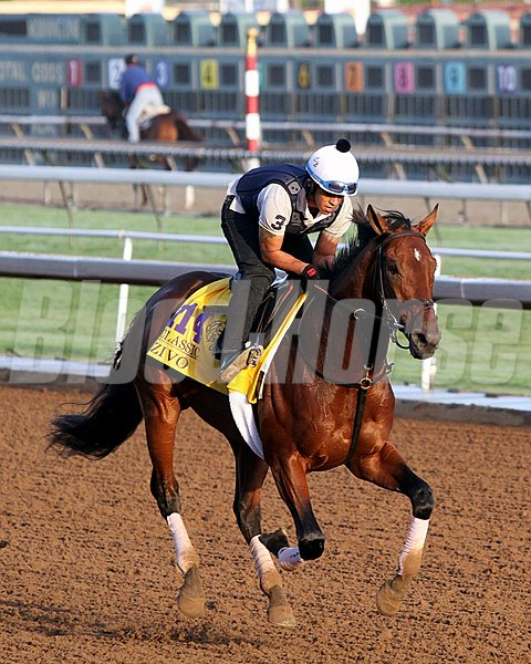 Zivo on the track at Santa Anita Park on October 30, 2014 preparing for the Breeders' Cup Classic. 