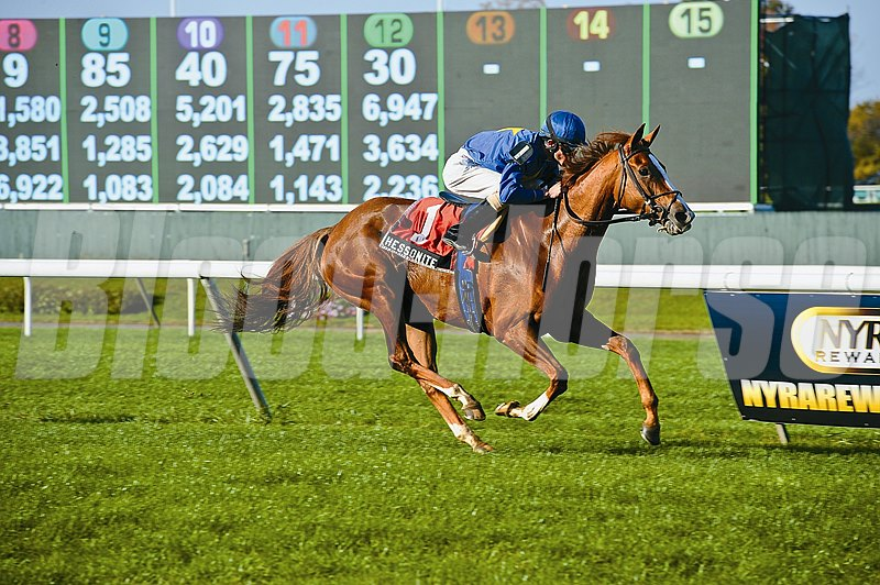 Hessonite wins the Ticonderoga Stakes with jockey Ramon Dominguez October 20, 2012.