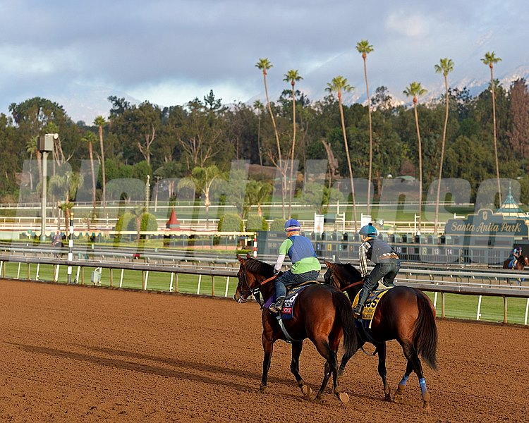 Secret Circle, left, and Bayern return to barn area after works for Bob Baffert on Oct. 26, 2014, at Santa Anita in preparation for the Breeders' Cup.