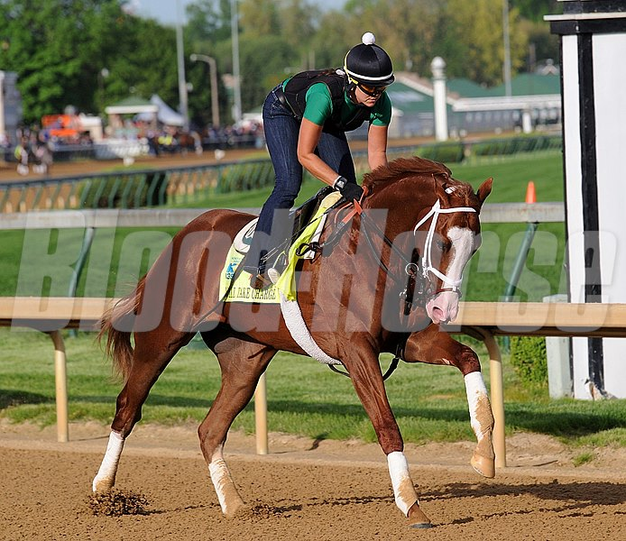 Will Take Charge works at Churchill Downs in preperation for the 2013 Kentucky Derby Photo by: Rick Samuels