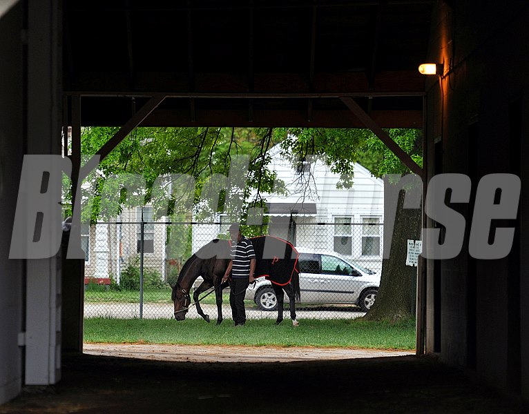 Kentucky Derby favorite Orb, grazing Friday morning...
