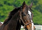 BC Juvenile Fillies Star Twilight Ridge Dies