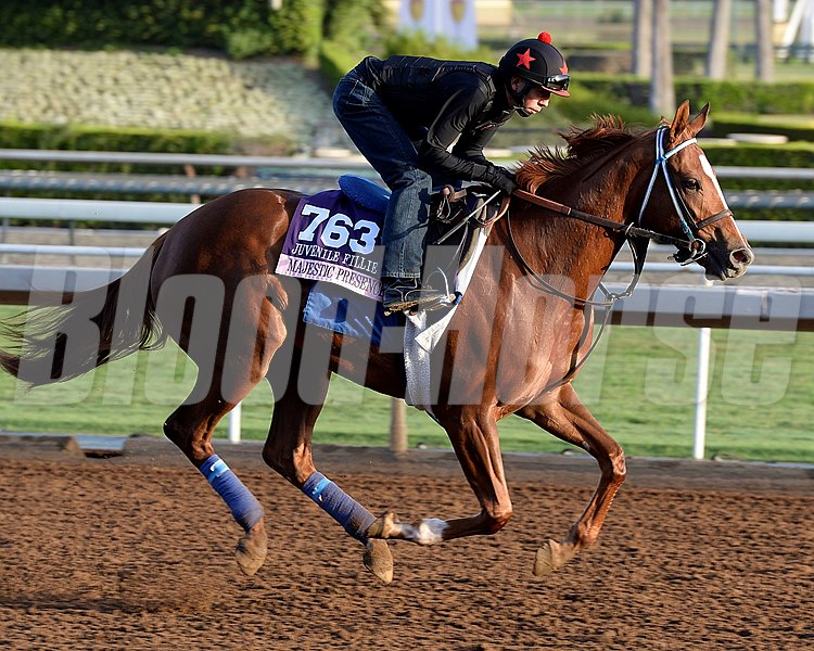 Caption:  Majestic Presence