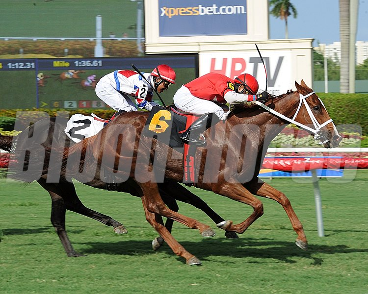 Millennia is victorious in the TaWee Stakes at Gulfstream Park in Hallandale, Florida.