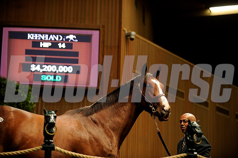 Hip14 A.P.Indy-Balance sold $4,200,000 at Keeneland Yearly Sales in Lexington KY 9.12.2010