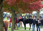 Keeneland Nov. Sale Sees More Gains