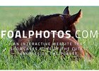 FoalPhotos.com Launched to Showcase Foals