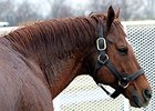 Slideshow: A Visit to WinStar Farm