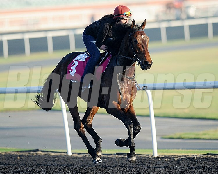 Lines of Battle jogs at Meydan March 29, 2013 preparing for the UAE Derby.