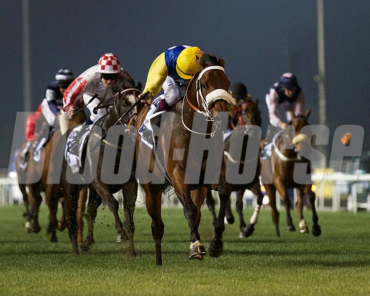 Shea Shea running in the Al Quoz Sprint on March 30th, 2013 at Meydan Racecourse.