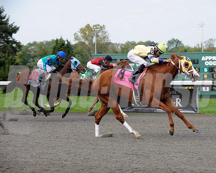 Tom and Matt Conway's Matthewsburg, sent off at 9-1, overtook the leaders in upper stretch and drew clear for a 2 1/4-length upset in the Grade III $100,000 Speightstown Kentucky Cup Sprint on September 24, 2011 at Turfway Park.