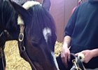 Vets Pleased with Rachel Alexandra's Progress