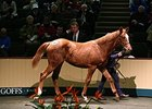 Goffs Registers Record-Breaking Foal Sale