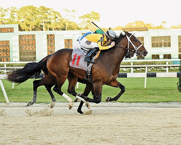 Stonestreet Stables' Ocean Knight remained undefeated in two starts and aced both his 3-year-old and stakes debuts, taking the $250,000 Grade III Sam F. Davis Stakes at Tampa Bay Downs.