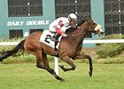 Stephanie's Kitten Returns a Winner at Tampa