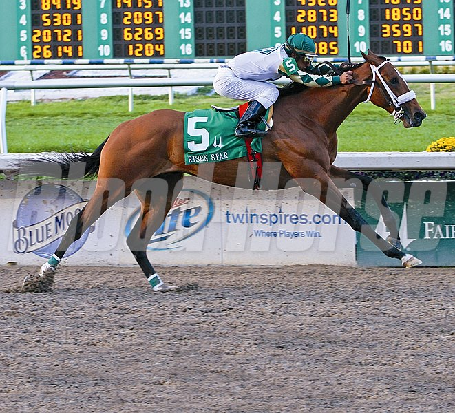Mucho Macho Man, with Rajiv Maragh aboard, easily wins the Grade II Risen Star Stakes at Fair Grounds in New Orleans, LA February 19, 2011.